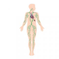 El Cuerpo Humano Por Dentro órganos Partes Y Sistemas Ech